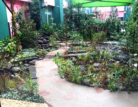 中庭にホタルが育つビオトープ